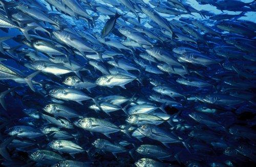 Fischwissen: Teamfähigkeit