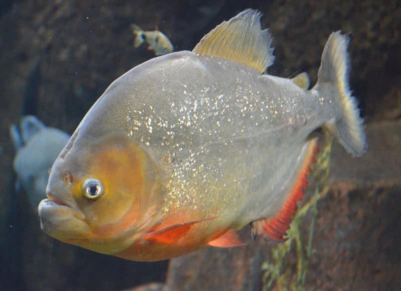 Fischwissen: Kommunikation