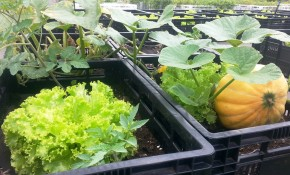 Das Eldorado des Urban Gardenings