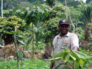 Klimapositive Schokolade schützt Umwelt