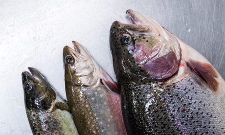 Neue Fortbildung: Gastronomen werden Fischsommelier