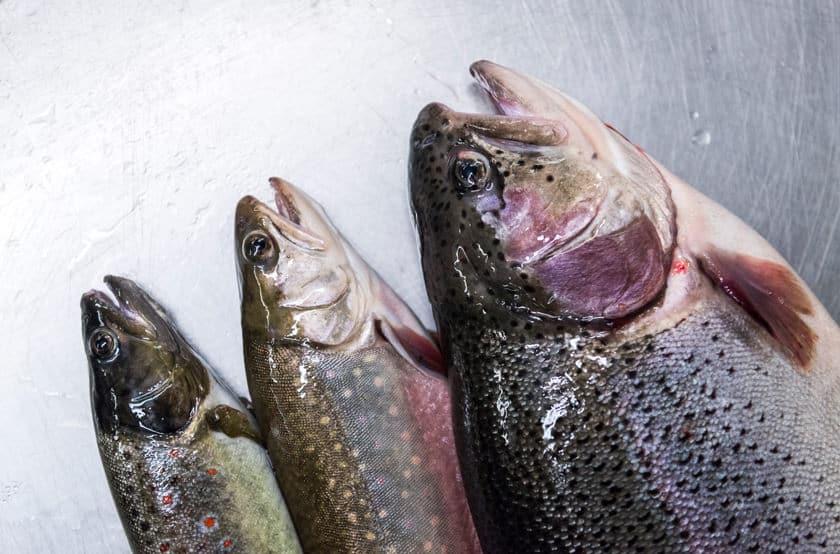Neue Fortbildung - Gastronomen werden Fischsommelier
