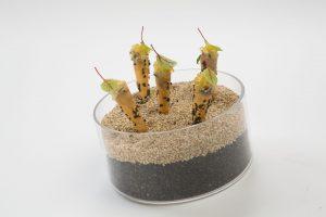 Matjes Inspiration von Del Fabro - Koch des Jahres - Foto von Melanie Bauer Photodesign