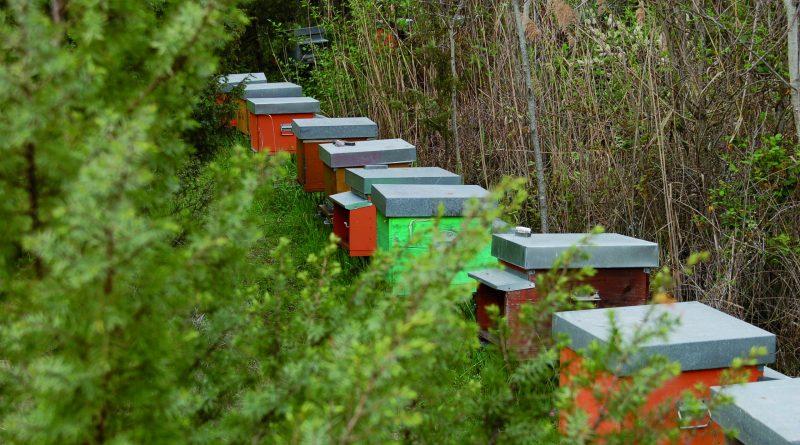 Bio-Strandhonig: Die flotten Bienen aus der Toskana
