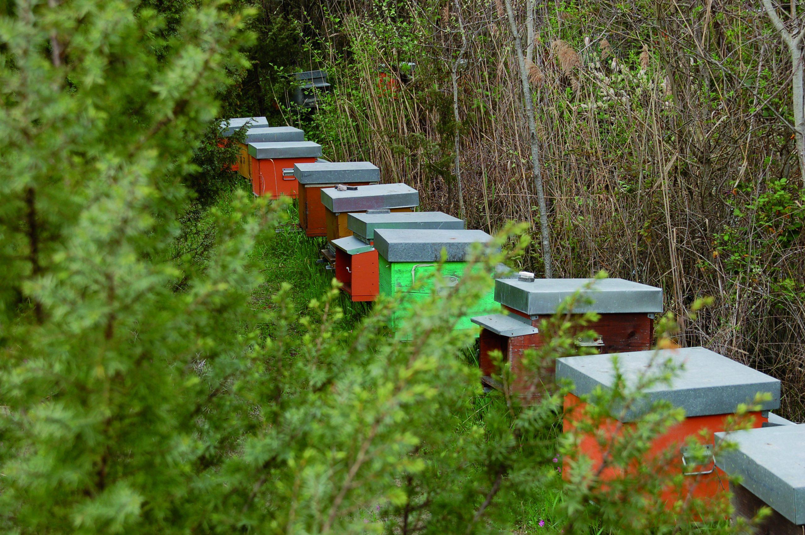 Bio-Strandhonig: Die flotten Bienen der Toskana