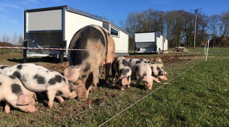 Mobile Schweineställe Familienaufzucht