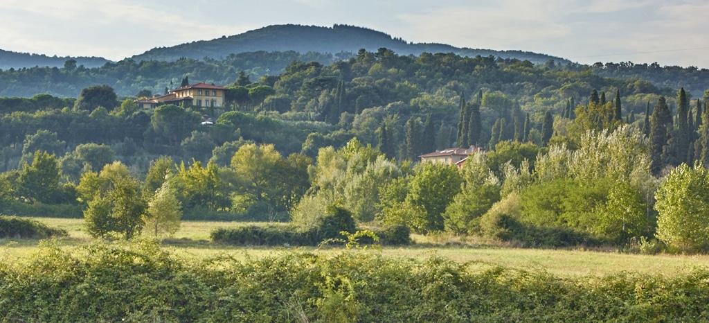 Weingut Il Palagio: Sting im toskanischen Bio-Paradies